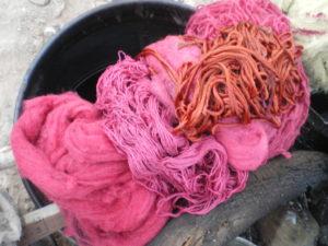 Teinture à la cochenille, à Mamiña, nord du Chili