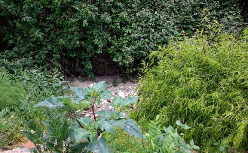 Toxiques, les plantes?