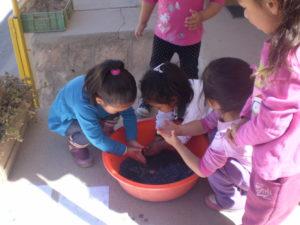 Les enfants de Mamiña teignent du papier au choux rouge