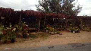 Postes de vente de fleurs au bord de la route vers Antsirabé, Madagascar