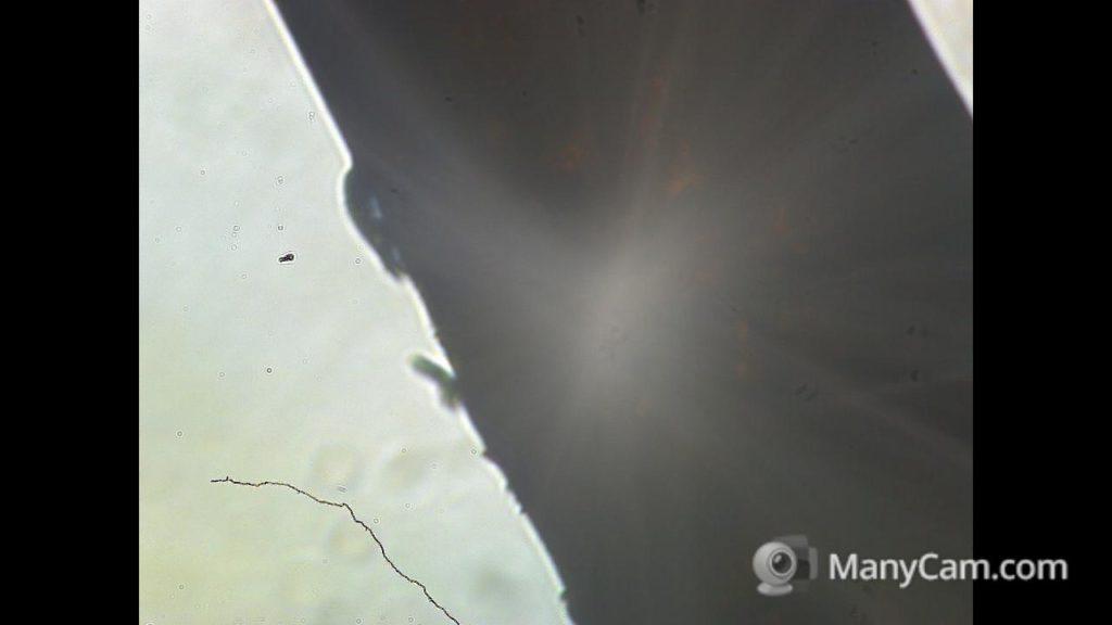 Crin de cheval, c'est vraiment très gros au microscope